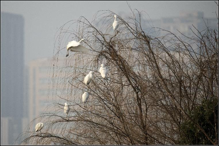 山清水秀鸟儿欢 新湖南www.hunanabc.com
