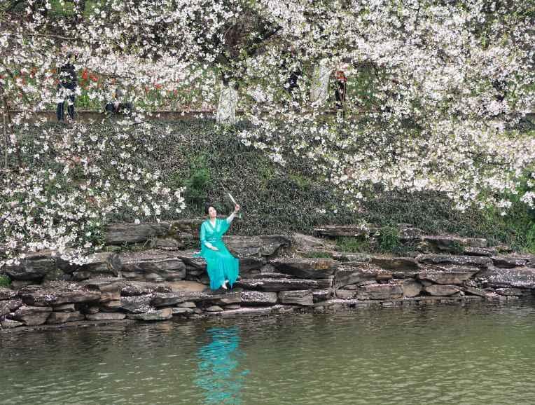 樱花引来羊城客 新湖南www.hunanabc.com